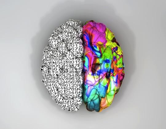 brain-shutterstock-128201873c